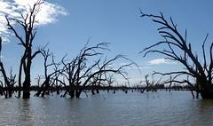 2016-08-17  - Pamamaroo Lake, Western NSW - 1 (Ian Granland) Tags: menindee pamamaroolake