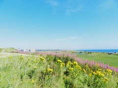 Coastal View from Broad Hill, Aberdeen, August 2016 (allanmaciver) Tags: yellow colours contrast green blue view north east sea coast aberdeen scotland low high rise flats seaton allanmaciver purple