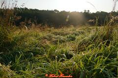 Wald Pilz und Tau Bilder (hubert_hamacher) Tags: wald pilze tau
