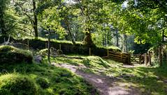 Narrator Farm_NK2_2206 (Jean Fry) Tags: dartmoor dartmoornationalpark devon englanduk moorland narratorfarm nationalparks tracks trees uk westcountry woodland paths rocks