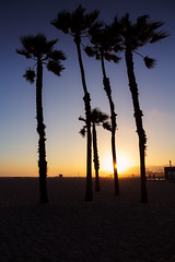 Palm (Aaron J Barber) Tags: usa palmtree palm beach sand sunset sky orange blue tree silhouette santamonica la losangeles ca california america unitedstatesofamerica summer sea ocean pacific scenery hot