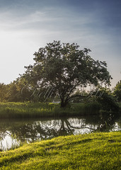 Tparti idill (Delfinibi) Tags: hungary magyarorszg mzuiko ungarn outdoor zuiko fa tree lake t sky g termszet nature natural natur nvny