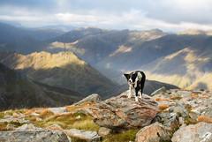 Islay (svensl) Tags: saddle forcan ridge sgurr na sgine highlands scotland kintail schottland