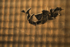 Dragons ship is approaching (Djaron van Beek (Will be back within a few days)) Tags: abstract groundglass milkglass wiredglass damaged backgroundisglass myimagination imaginative gluedwithblackplastic pattern texture gold copper partofabuilding window goldenhour 3deffect line dof depthoffield bokeh composition notthatmuchprocessed foundthescenelikethis shadowsandlight plastic black makeshift temporarily outdoor crossinglines decrepitude decay monochrome minimal raster city asamosaic art arty insideistapedtogether opaque sea cosmos boat space repetition shards geometry wildforms contrasts darktones stylizedwaves rorsach graphic surreal djaron djaronvanbeek