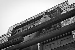 scottsdale 1170 (m.r. nelson) Tags: arizona urban bw usa southwest monochrome america blackwhite az bn americana scottsdale urbanlandscapes artphotography mrnelson newtopographic markinaz sonya77 nelsonaz