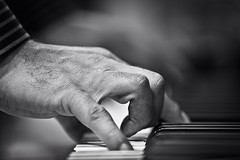 The Pianist (Mnahi Alghamdi) Tags: light macro canon photographer alien 5d jeddah abo  elites albaha    alghamdi   mnahi