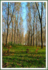 Autumn arrives (Tiziano Photography) Tags: autumn nature woods seasons autunno stagioni dryleaves warmcolors thegalaxy coloricaldi fogliesecche mygearandme mygearandmepremium rememberthatmomentlevel1 rememberthatmomentlevel2