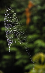 My Neighbor's Home (Alpha Beta Photography) Tags: green home nature wet beauty rain architecture garden spider droplets drops web arachnid spiderweb raindrops neighbor spidersilk