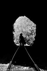 in & out (angelobike) Tags: train greece rails eikones elladas τραίνο racktrain οδοντωτόσ καλάβρυτα