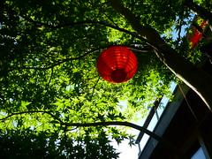 Rverbre rouge (Jrg Paul Kaspari) Tags: garden rouge maple innenhof jardin patio acer atrium garten acerpalmatum palmatum japanischer grner ahorn rverbre asiatisch fcherahorn
