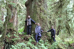 Musicwood crew photo (musicwood) Tags: old tree rain alaska forest growth sitka spruce tongass musicwood