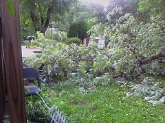 Tree limb down (sheradee) Tags: door wood house storm tree rain weather hail electric chair mess farmers lawn down pole kansascity electricity nightmare lightning justmarried insurance microburst bpu june2009 boardofpublicutilities sheilascellphone