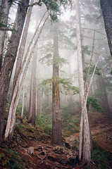 the day i stepped into a story (manyfires) Tags: trees tree film misty fog fairytale clouds analog forest landscape washington nationalpark woods moody hiking hike nikonf100 trail pacificnorthwest mtrainier pnw