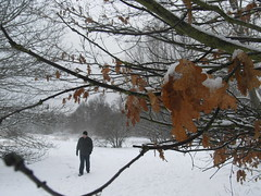 Man Walking on Wimbledon Common in the Snow (Jessicastjohn) Tags: winter snow london snowy wimbledon wimbledoncommon winterweather wintery