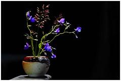 Flowers in Spot light