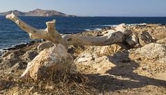 Paros (Nebelkuss) Tags: mar mediterranean mediterraneo greece grecia greekislands paros islas egeo aegeansea cicladas
