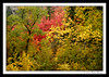 Fall @ Pallisdes Creek, Idaho (Nabin Thomas) Tags: autumn trees fall leaves idaho swanvalley malayalikkoottam pallisadescreek