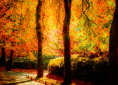 Golden light (Steve-h) Tags: park autumn trees ireland dublin sun sunlight green art tourism nature colors leaves sunshine canon eos gold golden design europe colours shadows zoom tourists telephoto shade handheld paths recreation bushes railings aerlingus hedges ststephensgreen aperturepriority steveh canonef100400mmf4556lisusm 100mm400mm canoneos5dmkii canon5dmk2 multisegmentmetering mygearandme october2012 mygearandmepremium mygearandmebronze mygearandmesilver mygearandmegold mygearandmeplatinum mygearandmediamond galleryoffantasticshots rememberthatmomentlevel4 rememberthatmomentlevel1 rememberthatmomentlevel2 rememberthatmomentlevel3 rememberthatmomentlevel7 rememberthatmomentlevel9 rememberthatmomentlevel5 rememberthatmomentlevel6 rememberthatmomentlevel8 rememberthatmomentlevel10