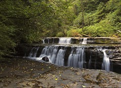 SWEET CREEK TRAIL (bydamanti) Tags: oregon waterfalls oregoncoast mothernature siuslawnationalforest wateroceanslakesriverscreeks canonef1740mmf4l sweetcreektrail anythingtodowithwater natureislovely oneearthonehome capturenature exquisitewaterfalls roadscholaroregoncoastwithmasonmarsh oregoncoastdigitalphotography