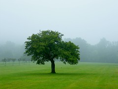 Alone (Stanley Zimny) Tags: park mist tree nature fog garden botanical skylands 941