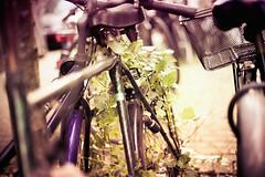 cycles in love (Paul und Lotte) Tags: old abandoned overgrown deutschland weed alt hamburg bikes bicycles fahrrad cycles germay stgeorg unkraut zugewachsen