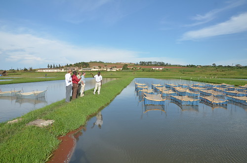 Source of the Nile (SoN) fish farm. Photo by Jens Peter Tang Dalsgaard, 2012.