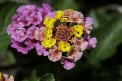 Flower_SAF9839 (sara97) Tags: copyright2016saraannefinke flower flowering floweringplant missouri nature outdoors photobysaraannefinke saintlouis towergrovepark urbanpark
