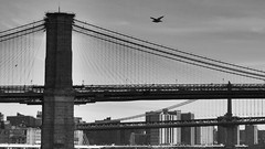 Morning flight (Lojones13) Tags: skyline bird flight cityscape nikon d5000 blackandwhite bridge brooklynbridge tower brroklyn manhattan architecture newyork
