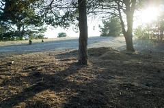 Late Light (Joe Josephs: 2,861,655 views - thank you) Tags: joejosephsphotography joejosephs copyrightjoejosephsphotography california californiacentralcoast californiacoast forests trees travelphotography travel hiking walking adventure outdoorphotography trails sunlight sunset fiscaliniranchpreserve fiscaliniranch