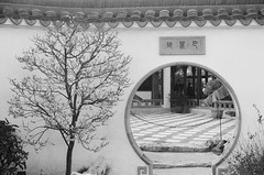 Japanese Plum Starting to Bloom at the Huntington's Chinese Garden (Ms. Jen) Tags: 2016 bw bwfilm ilford ilfordhp5 ilfordhp5plus400 ilfordhp5plus400bwfilm photobyjeniferhanen blackandwhite blackandwhitefilm film msjencom huntingtonlibraryandgardens chinesegarden thehuntington japaneseplumb roundgateway rounddoor mume prunusmume sanmarinocalifornia nikonfm3a nikon nikon50mmf18lens 50mmlens 50mm