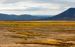 4Y4A3235 (francois f swanepoel) Tags: glynis landscapes landskappe noordkaap northerncape tankwakaroo scatterred versprei gebroke zigzag