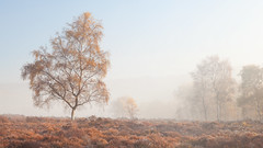 Lawrence Field (Paul Newcombe) Tags: autumn lawrencefield peakdistrict derbyshire tree fog mist paulnewcombephotography uk countryside outdoor peaks nationalpark misty colour trees 2015 november