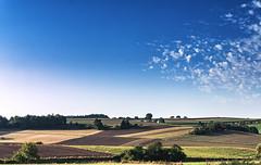 Abgeerntet (s.lang534) Tags: nature natur feld grasland august sommer summer cloud wolken yello gelb brown braun blue blau heisermorgen lumixgx7