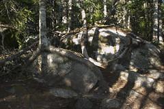 The Bluff Wilderness Trail (HalifaxTrails.ca) Tags: hiking trail tree summer timberlea roots bluff wilderness halifax blt nova scotia back country