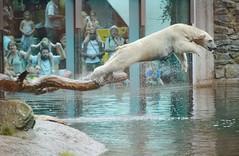 Ouwehands Dierenpark (Hugo Sluimer) Tags: owehands dierenpark ouwehandsdierenpark rhenen dierentuin zoo