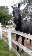Friendly (ohange2008) Tags: blackhorse