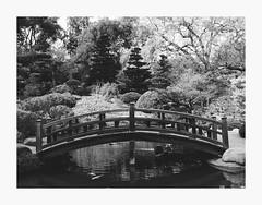 Bridged (bnishimoto) Tags: fuji fujifilm myfujifilm xt1 hakonegardens saratoga bayarea photoessay 23mm bw bridge