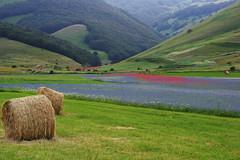 Castelluccio (kmclaudio) Tags: pentaxart castelluccio norcia umbria colori campagna fiori luce ombra atmosfera allaperto paesaggio campo aerea