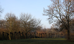 18-IMG_4618 (hemingwayfoto) Tags: allee baum beschnitten frhling hannover kopfweide lichtmomente maschsee schnellergraben
