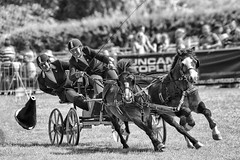 Enjoying their sport. (bainebiker) Tags: horses sport scurrydriving equestriansport monochrome oakham rutland uk