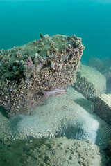se3500_IMG_1055 (OKANO14) Tags: hong kong scuba diving