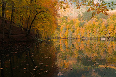The Partitions (RKAMARI) Tags: deringl yedigllernationalpark autumn cloudyframe daylight forest lake landscape nature outdoor reflections travel trees water