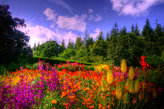 Colourful Landscape (Vicky...Lewis (www.vixgallery.com)) Tags: uk flowers trees light summer sky cloud sunlight southwest colour nature floral canon landscape scenery view bright britain scene devon torrington westcountry colouful northdevon greattorrington rhsrosemoorgardens mygearandme