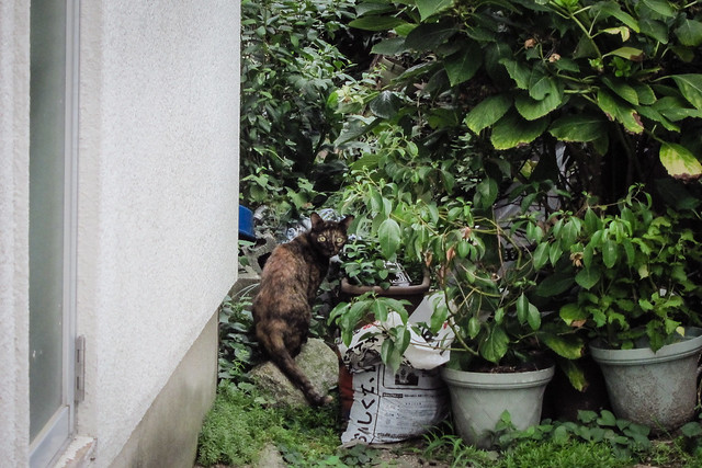 Today's Cat@2012-08-30