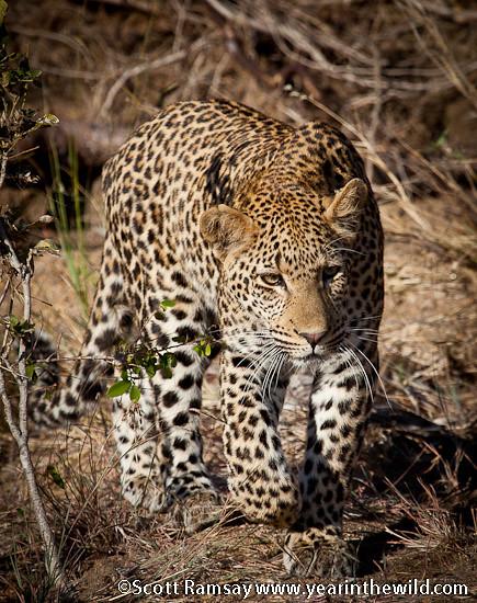 Kruger National Park - Scott Ramsay