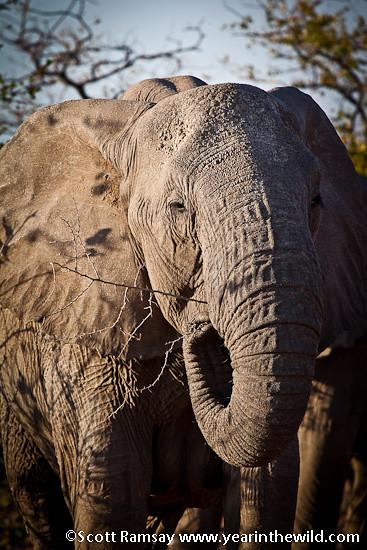 Mapungubwe National Park - South Africa