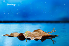 Survivors (AimishBoy) Tags: cruise nature water animal canon bug insect stars boat leaf couple sailing flood bokeh insects 100mm fantasy journey