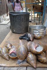 Giant snails (10b travelling / Carsten ten Brink) Tags: africa food market eating snail ghana westafrica afrika centralmarket 2012 westafrika afrique kumasi openmarket ouest giantsnail kejetia carstentenbrink photoused