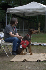 Dobies make great service dogs (kmkruswick) Tags: dru dog doberman dobie 2012 fallpicnic dobermanrescueunlimited
