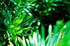 (Damien Cox) Tags: uk plant green nature leaves nikon web cobweb damiencox dcoxphotographycom